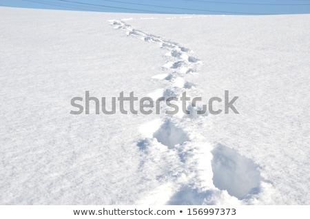 insan · dağ · kış · kar · yürümek · çocuk - stok fotoğraf © nneirda