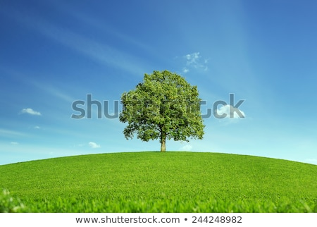 Single tree in agricultural field Stock photo © ivonnewierink