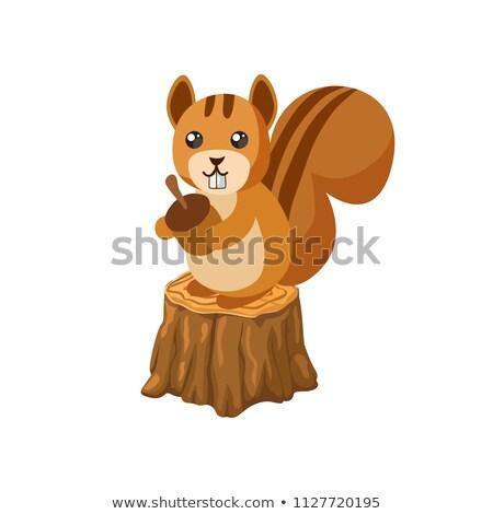 Esquilo assinar realista pele Foto stock © Lightsource