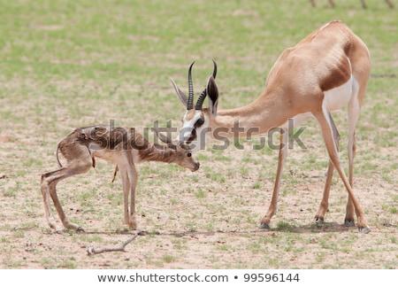 bebek · iki · genç · çöl · alan · gıda - stok fotoğraf © ottoduplessis