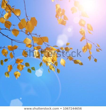 Sarı huş ağacı yaprakları mavi gökyüzü sonbahar renkli Stok fotoğraf © Mps197