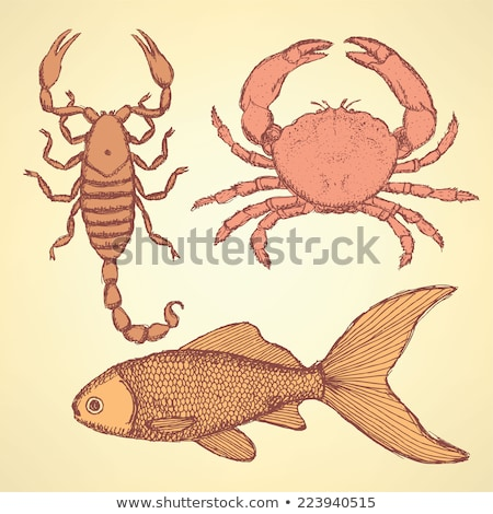 sketch cute crab scorpion and fish stock photo © kali