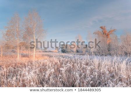 Gelo view albero natura luce Foto d'archivio © olandsfokus