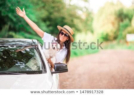 womn driving a car stock photo © stevanovicigor