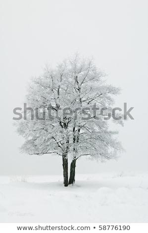 Stock fotó: Fa · hó · fedett · mező · háttér · tél