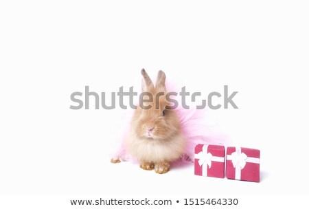 Nyuszi nyúl ül rózsaszín ajándék doboz fehér Stock fotó © wavebreak_media