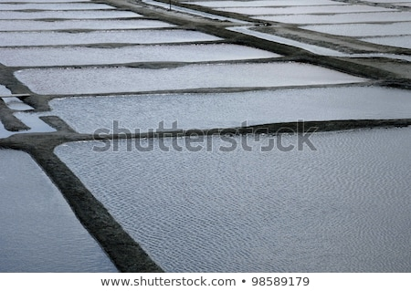 Evaporation ponds for sea salt production Stock photo © chris2766