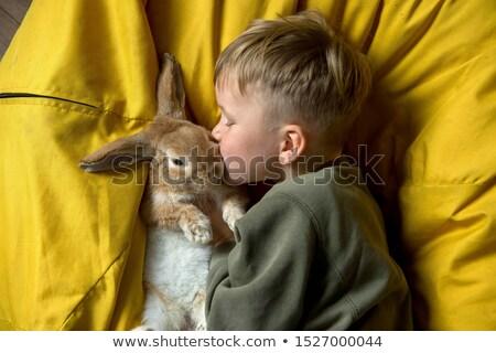 Grappig konijnen familie Easter Bunny groen gras mand Stockfoto © ElaK