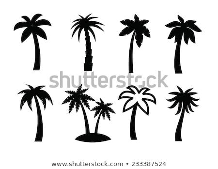 Palmera icono árbol palma signo tropicales Foto stock © kiddaikiddee