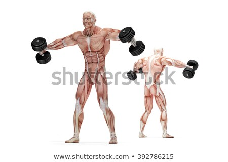 Lateral raises shoulders exercise. Anatomical illustration. Isolated. Clipping path Stock photo © Kirill_M