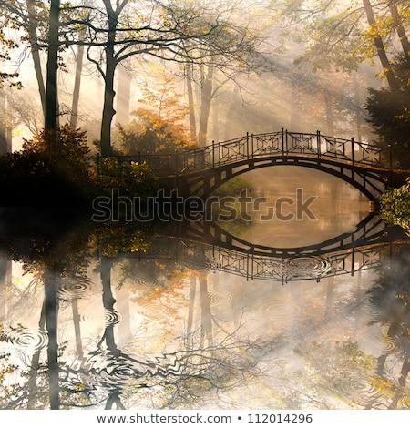 秋 霧の 公園 木 秋 ストックフォト © SergeyAndreevich