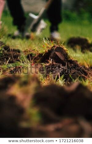 Yeşil toprak dikey temizlemek dünya gezegeni alan Stok fotoğraf © macropixel