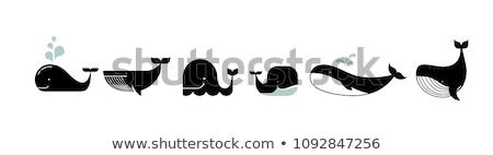 azul · desenho · animado · baleia · branco · feliz · subaquático - foto stock © bluering