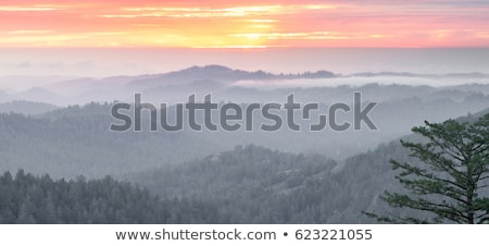 Foggy Forest and Ocean Sunset of Santa Cruz Mountains Stock photo © yhelfman