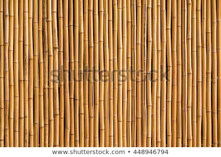 Bamboo fence background texture Stock photo © stevanovicigor