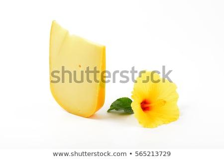 Peynir ebegümeci dilim çiçek beyaz beyaz arka plan Stok fotoğraf © Digifoodstock
