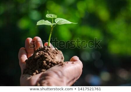 Stockfoto: Groeien · handen · man · jonge · plant · abstract