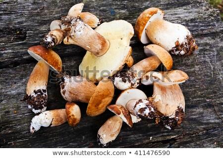 sazonal · cogumelos · branco · floresta · natureza · beleza - foto stock © valeriy