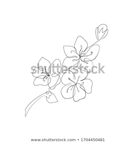 apple · tree · maçã · branco · ilustração · natureza · fundo - foto stock © upimages