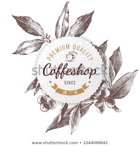 café · planta · ramo · folha · baga · grão · de · café - foto stock © frescomovie