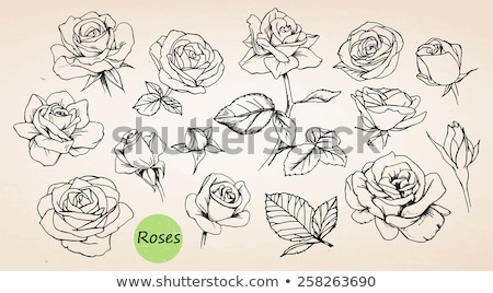 Rose. Vector. Hand drawn artwork Stock photo © frescomovie