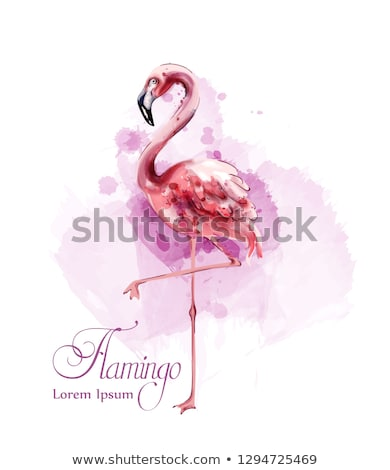 Flamingo in watercolor isolated Vector. Exotic bird cute poster templates Stock photo © frimufilms
