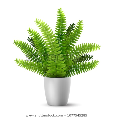 Plant for Room Decoration, Foliage Flora in Pot Stock photo © robuart