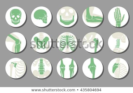 emberi · anatómia · gerincoszlop · fehér · illusztráció · egészség · művészet - stock fotó © smoki