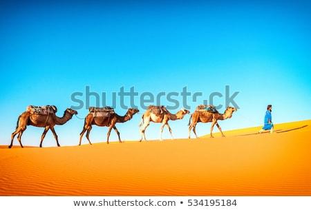 Areia deserto camelo paisagem palmeiras sol Foto stock © barsrsind
