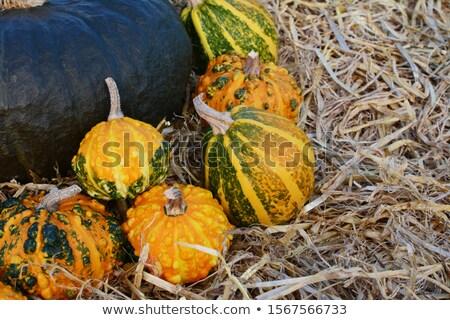 Orange and green ornamental gourds against dark green gourd Stock photo © sarahdoow