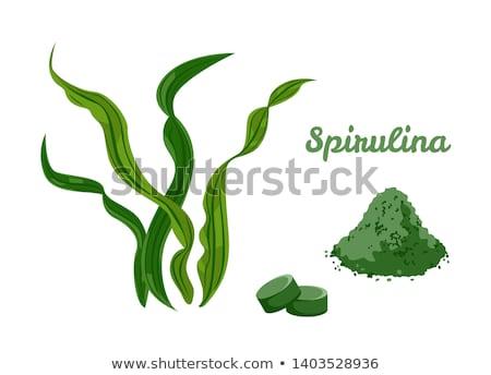 Vektör bitki alg karikatür stil yalıtılmış Stok fotoğraf © barsrsind