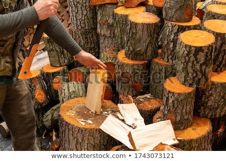 древесины иллюстрация фон искусства науки Сток-фото © bluering