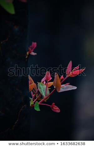 A burnt tree sprouts new growth from its tree trunk Stock photo © lovleah