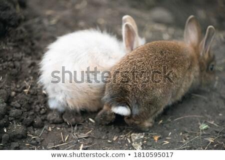 Tavşan portre sevimli yeşil çayır Stok fotoğraf © KonArt