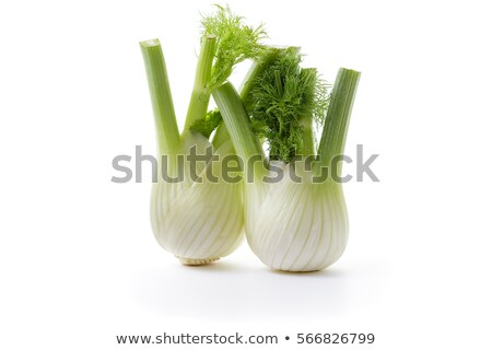 Two fennel stock photo © Antonio-S