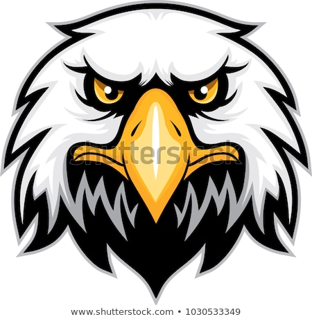 Mascot Head of an Falcon or Hawk Vector Illustration Stock photo © chromaco