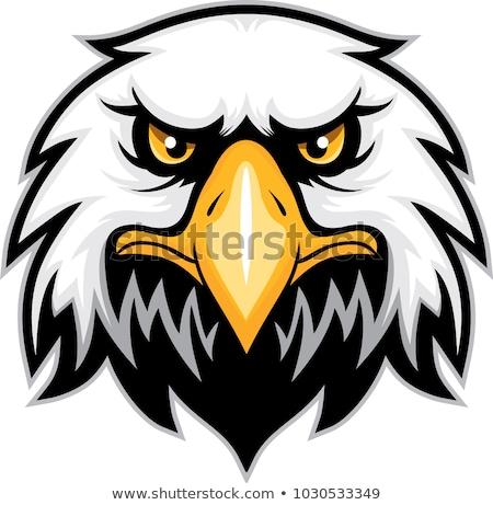 Stock foto: Mascot Head Of An Falcon Or Hawk Vector Illustration