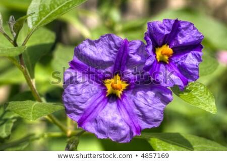 çiçekler hdr resim doğa yaz yeşil Stok fotoğraf © smithore