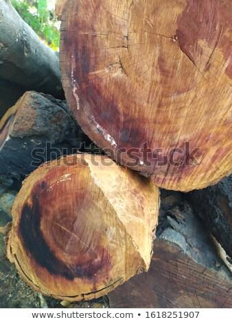 yakacak · odun · görmek · yangın · orman - stok fotoğraf © lianem