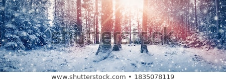 Frozen north woods in snow Stock photo © pzaxe