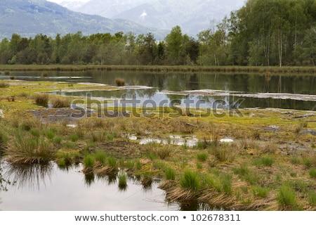 The Nicklheim Upland Moor In Southern Bavaria Germany Stok fotoğraf © haraldmuc
