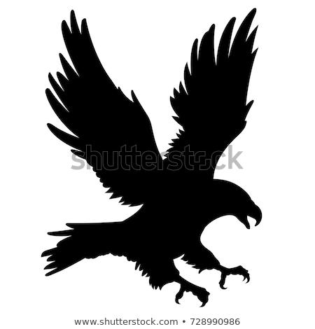 sziluett · sas · háttér · madár · fekete · szabadság - stock fotó © perysty