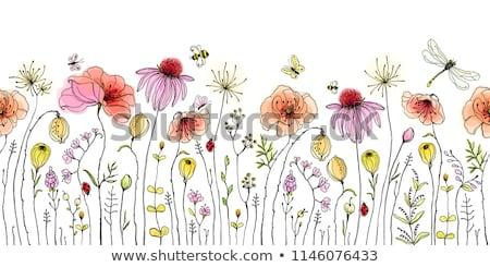 Полевые цветы карт старые ткань фон искусства Сток-фото © marimorena