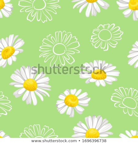 ромашка · цветок · Ромашки · медицинской · вектора - Сток-фото © hermione