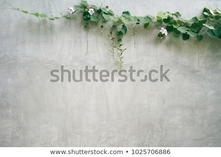 Oude houten muur plant groene Stockfoto © pab_map