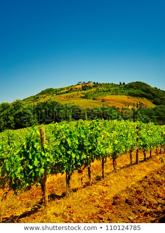 виноград · изюм · природы · Греция · продовольствие · фрукты - Сток-фото © vavlt