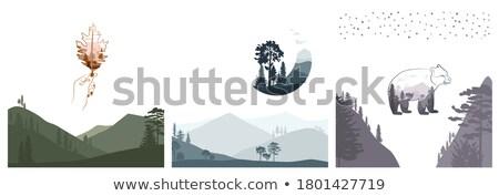 Wild forest bear vector Stock photo © krabata