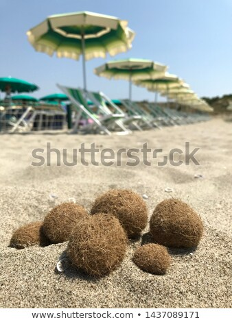 Stock photo: algae seaweed dried on Mediterranean beach