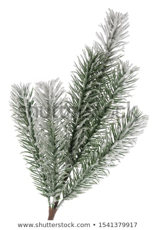 Single Conifer Branch in the Snow Stock photo © tepic