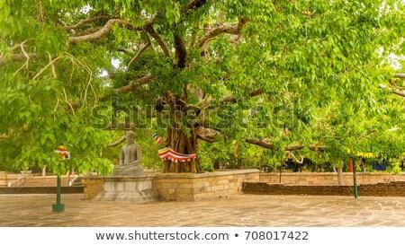 Statue in the Jetavanarama Dagoba, Sri Lanka Stock photo © meinzahn